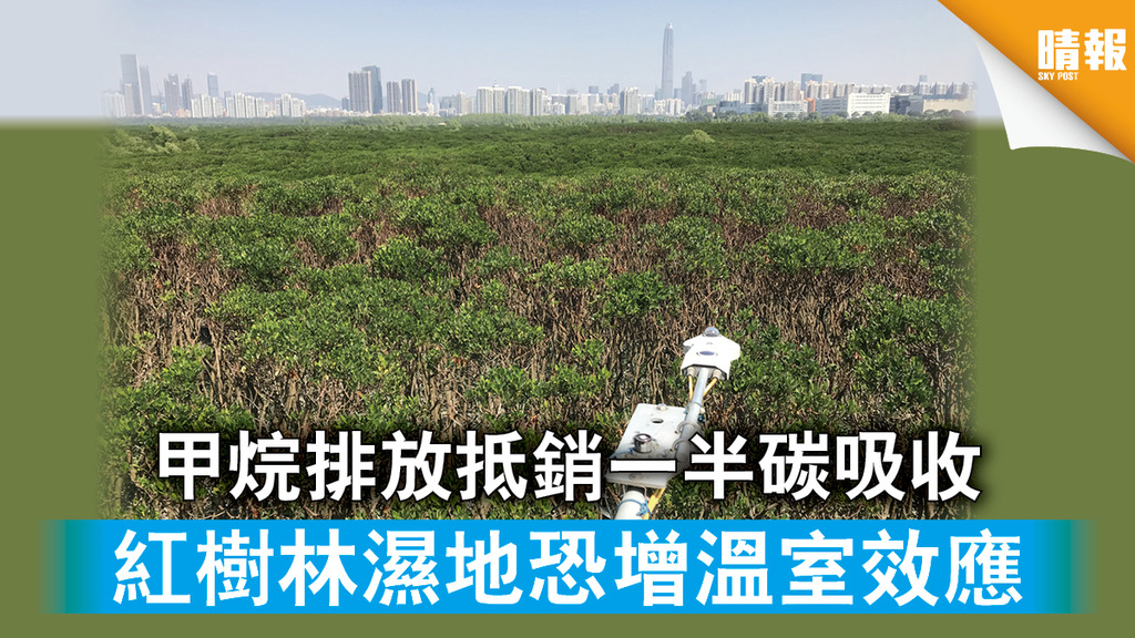 【氣候變化】甲烷排放抵銷一半碳吸收 紅樹林濕地恐增溫室效應