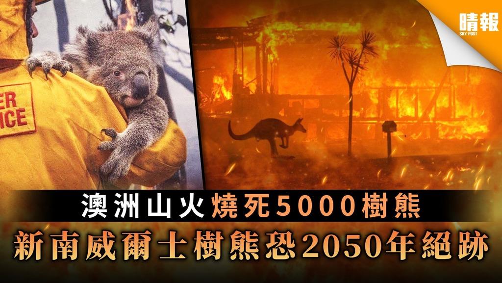 【救救樹熊】澳洲山火燒死5000樹熊 新南威爾士樹熊恐2050年絕跡