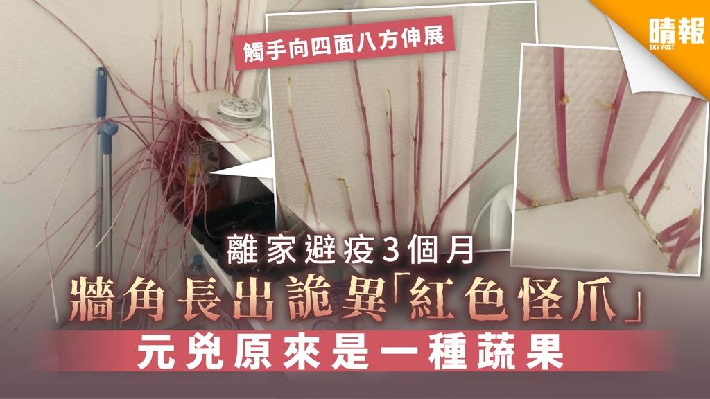 【千奇百趣】離家避疫3個月 牆角長出詭異「紅色怪爪」元兇原來是一種蔬果