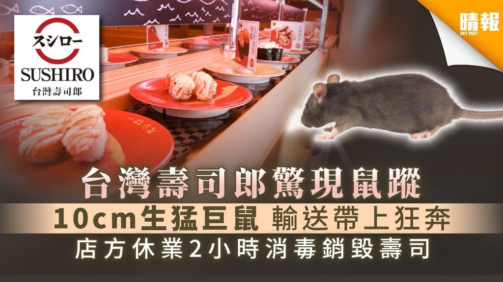 【食用安全】台灣壽司郎驚現鼠蹤 10cm生猛巨鼠輸送帶上狂奔 店方休業2小時消毒銷毀壽司