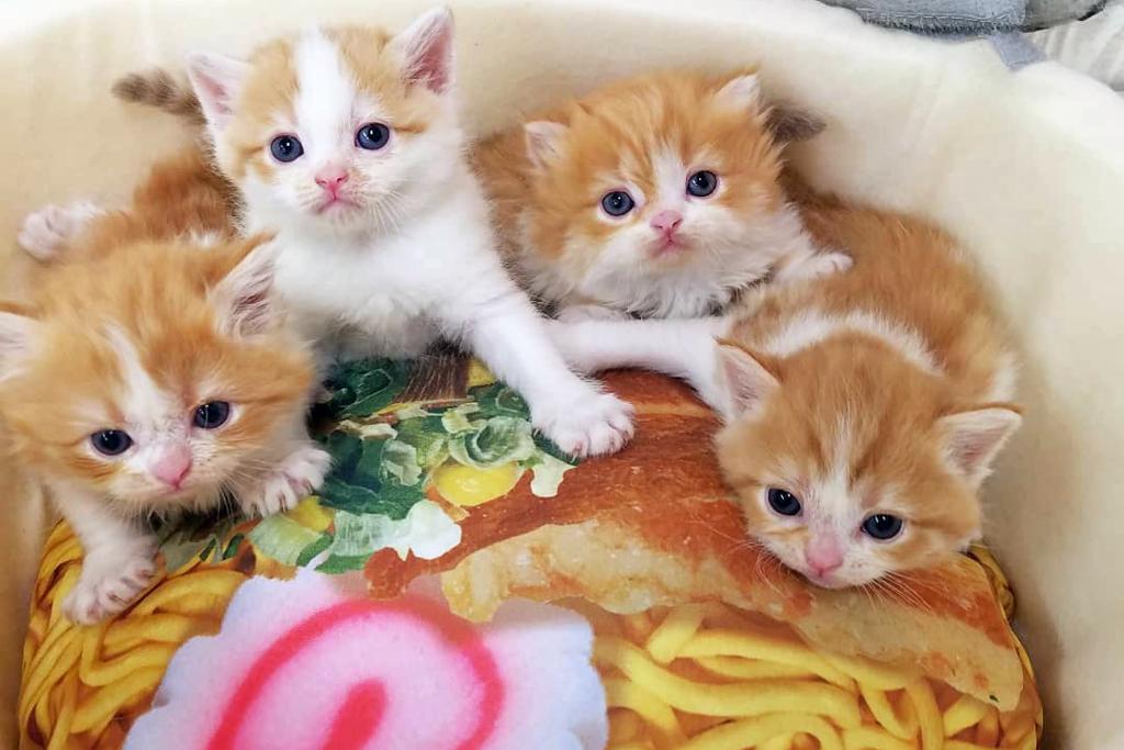 打開魚罐頭/杯麵驚喜發現貓貓! 可愛小貓BB萌爆治癒你心~