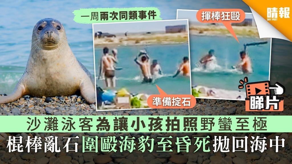 【冷血殘忍】沙灘泳客為讓小孩拍照野蠻至極 棍棒亂石圍毆海豹至昏死拋回海中