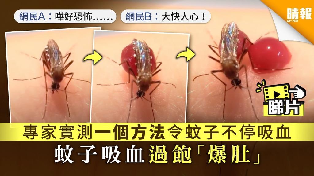 【澳洲實驗.有片】專家實測一個方法令蚊子不停吸血 蚊子吸血過飽「爆肚」
