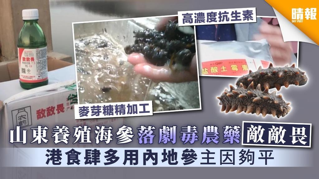 【食用安全】山東養殖海參落劇毒農藥「敵敵畏」 港食肆多用內地參主因夠平