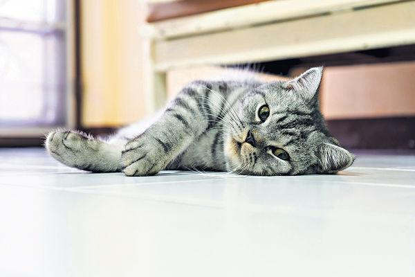 再有貓隻病毒測試陽性 暫無病徵