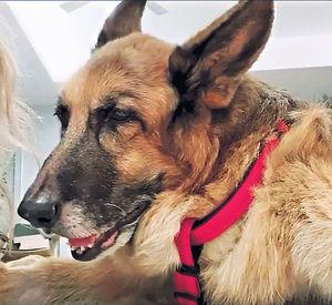 15歲年邁愛犬無胃口 鄭秀文︰特別懷念牠貪吃的表情