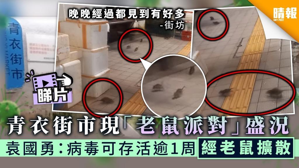 【街市衛生】青衣街市現「老鼠派對」盛況 袁國勇:病毒可存活逾1周經老鼠擴散
