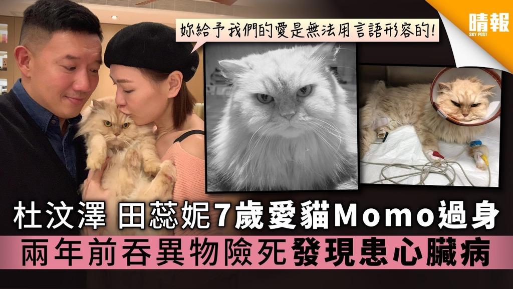 杜汶澤田蕊妮7歲愛貓Momo過身 兩年前吞異物險死發現患心臟病