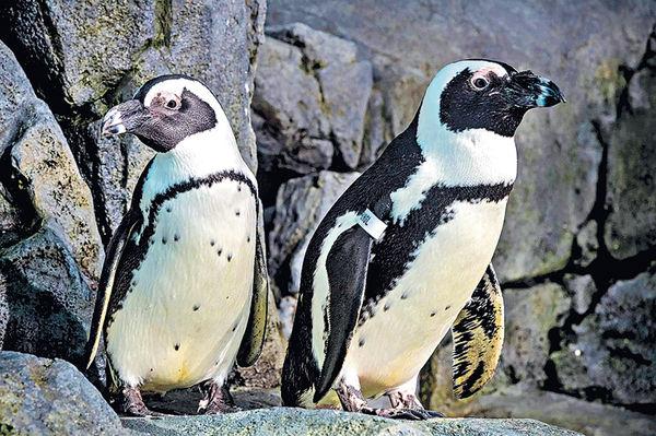 虛擬遊覽水族館 睇企鵝開餐