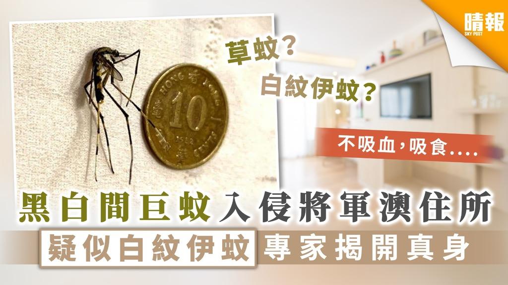 【白紋伊蚊?】黑白間巨蚊入侵將軍澳住所 疑似白紋伊蚊專家揭開真身