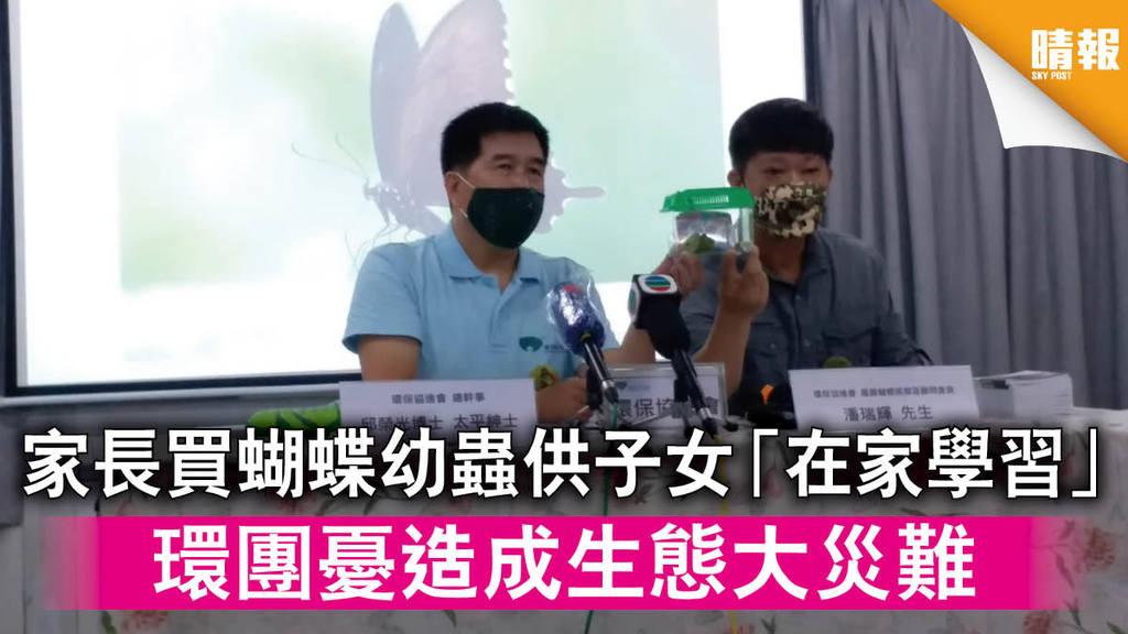 【新冠肺炎】家長買蝴蝶幼蟲供子女「在家學習」 環團憂造成生態大災難