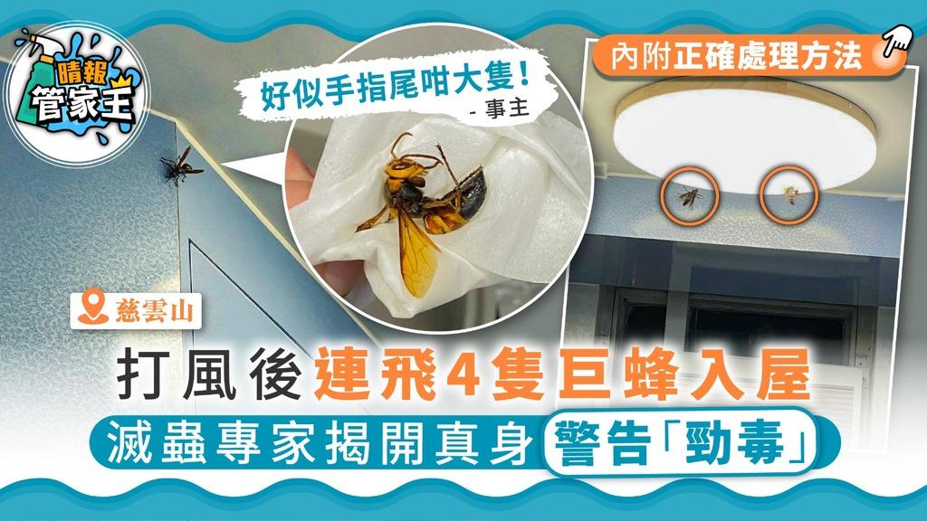 【有蜂入屋】打風後連飛4隻巨蜂入屋 滅蟲專家揭開真身警告「勁毒」
