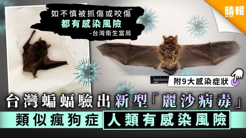 【新型病毒】台灣蝙蝠驗出新型「麗沙病毒」 類似瘋狗症人類有感染風險【附9大感染症狀】