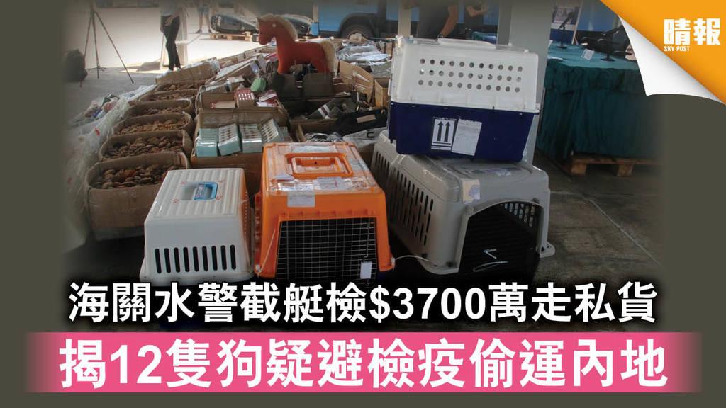 【新冠肺炎】海關水警截艇檢$3700萬走私貨 揭12隻狗疑避檢疫偷運內地