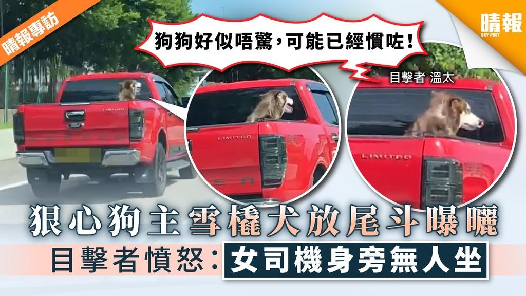 【狠心狗主】32°C炎夏雪橇犬放尾斗曝曬 目擊者憤怒:女司機身旁無人坐!