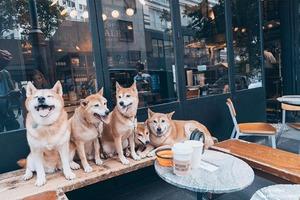 【寵物好去處】香港7間寵物友善餐廳推薦!室內餐廳/戶外露天Cafe/狗狗雪糕