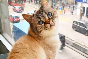 【貓Cafe 香港/觀塘好去處】貓奴天堂!觀塘新開樓上貓貓Cafe 50隻可愛小貓坐鎮等住同大家玩遊戲~
