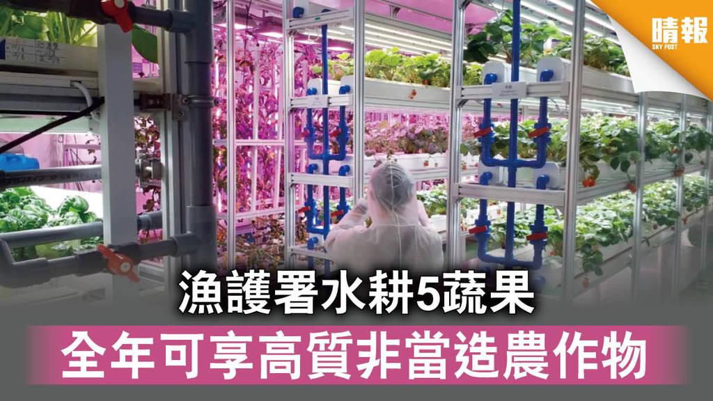 【本地生產】漁護署水耕5蔬果 全年可享高質非當造農作物