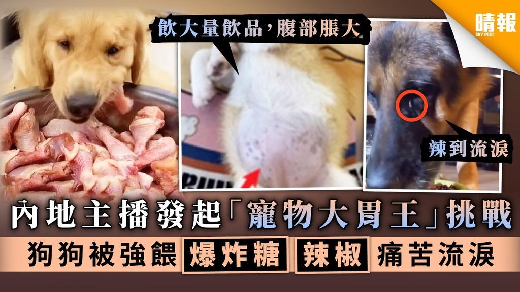 【直播轉型】內地主播發起「寵物大胃王」挑戰 狗狗被強餵爆炸糖辣椒痛苦流淚