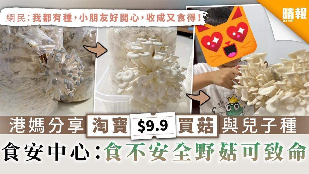 【食用安全】港媽分享淘寶$9.9買菇與兒子種 食安中心:食不安全野菇可致命