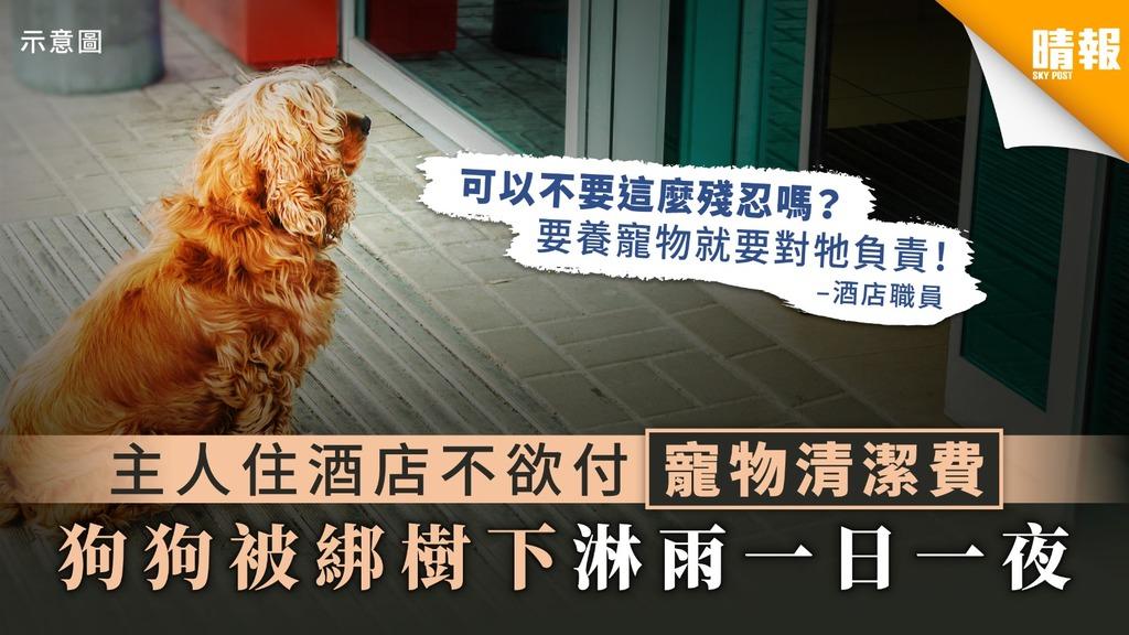 主人住酒店不欲付寵物清潔費 狗狗被綁樹下淋雨一日一夜