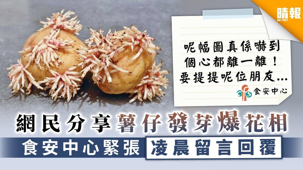 【食用安全】網民分享薯仔發芽爆花相 食安中心緊張凌晨留言回覆【小心6種含天然毒素食物】