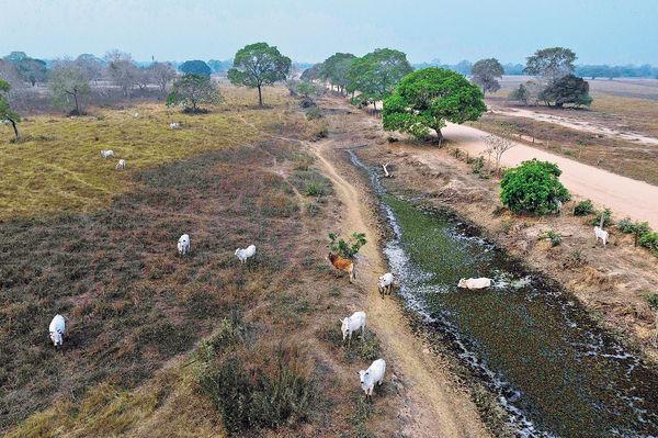 巴西濕地遇火劫 五分一生物群被毀
