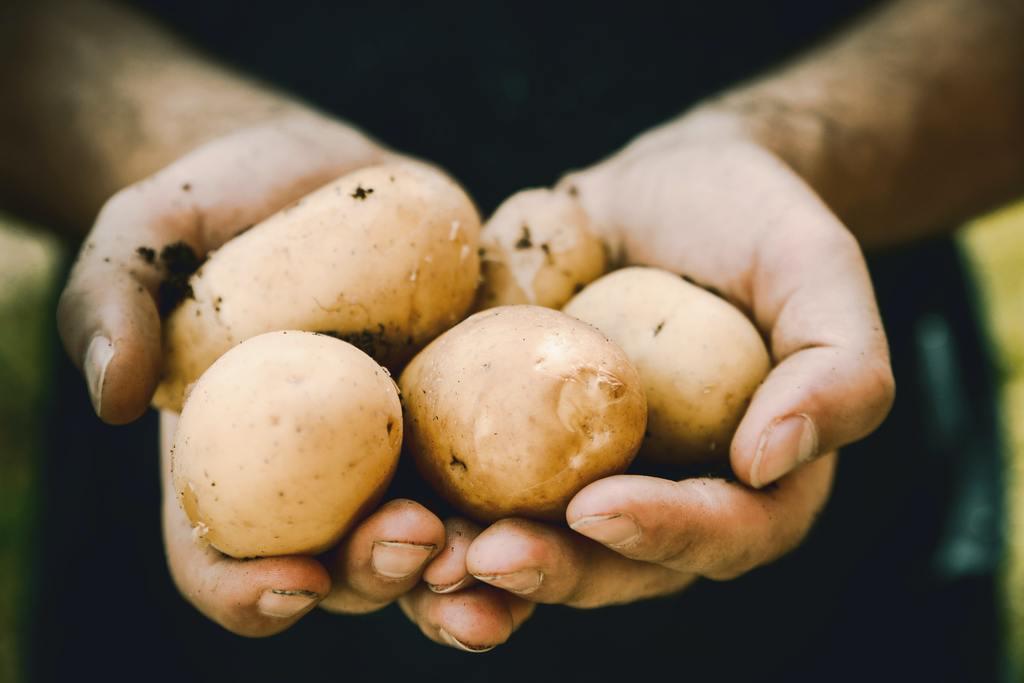 若出現以上情況,應整個薯仔丟掉,因為難以判斷薯皮或發芽部分要削多少才安全,而且烹煮過程中並不能破壞苷生物鹼。