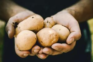 【食用安全】網民放薯仔3個月驚見爆芽薯仔花 食安中心凌晨現身:嚇到個心都離一離(附食安貼士)