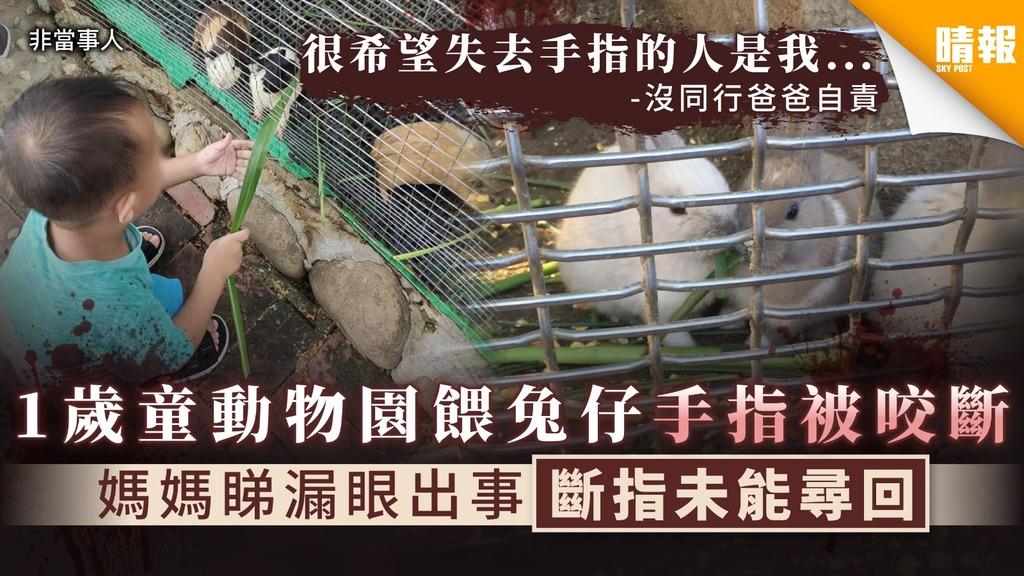 【兔子咬斷手指】1歲童動物園餵兔仔手指被咬斷 媽媽睇漏眼出事斷指未能尋回