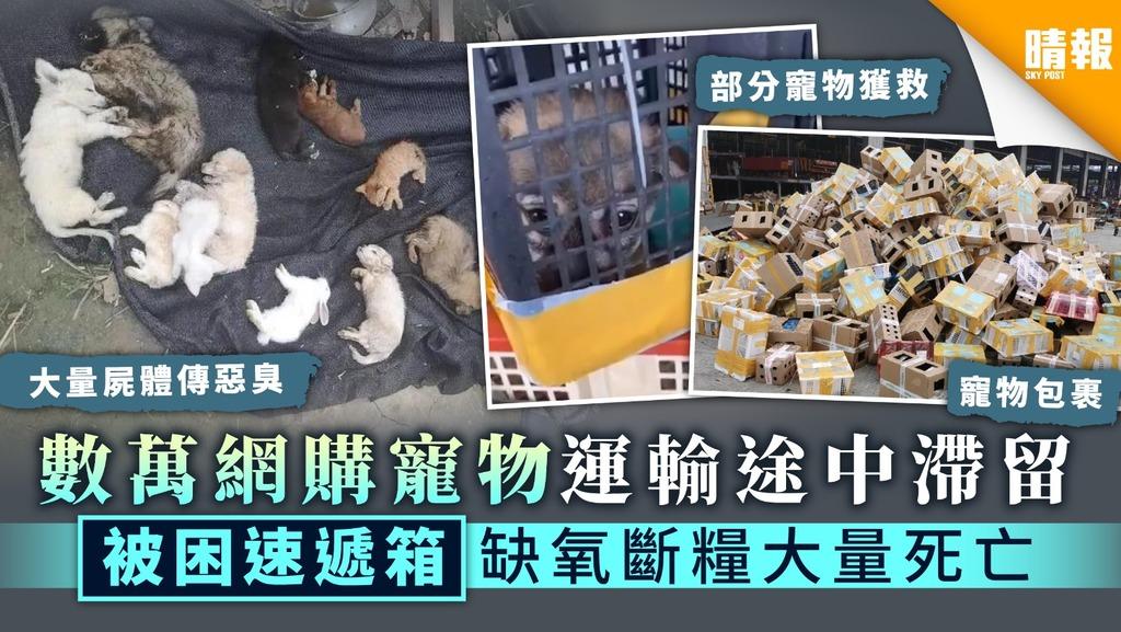 【尊重生命】數萬網購寵物運輸途中滯留 被困速遞箱缺氧斷糧大量死亡