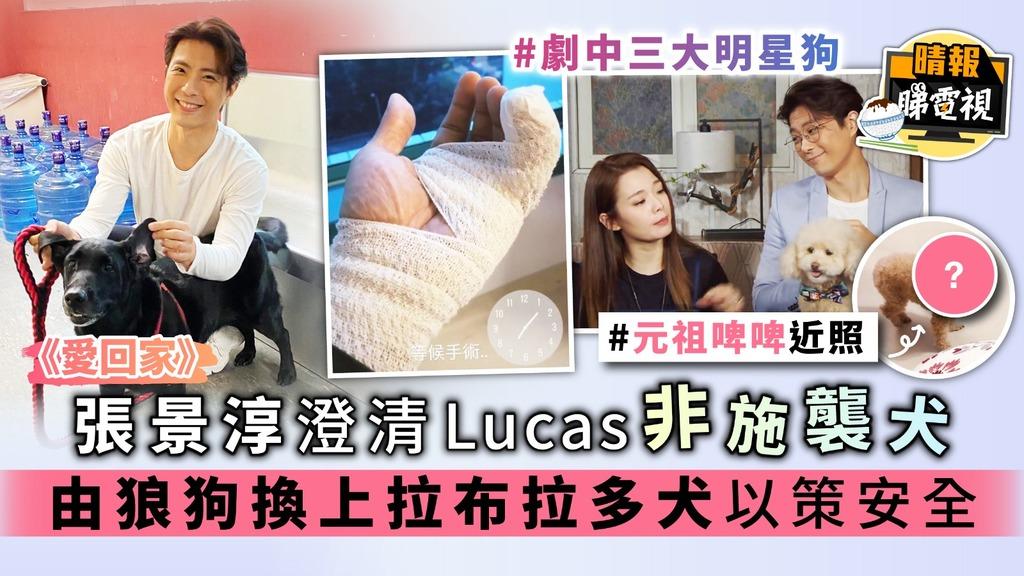 《愛回家》張景淳澄清Lucas非施襲犬 由狼狗換上拉布拉多犬以策安全