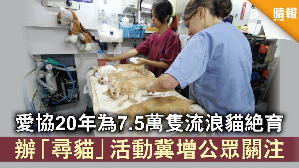 【街頭救貓】愛協20年為7.5萬隻流浪貓絕育 辦「尋貓」活動冀增公眾關注