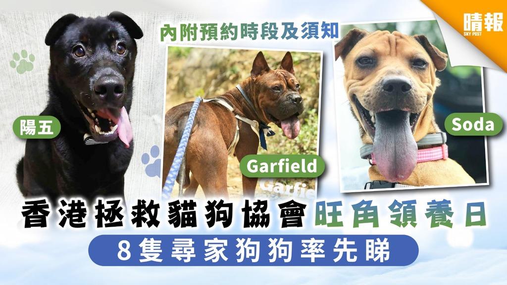 【周日好去處】香港拯救貓狗協會旺角領養日 8隻尋家狗狗率先睇