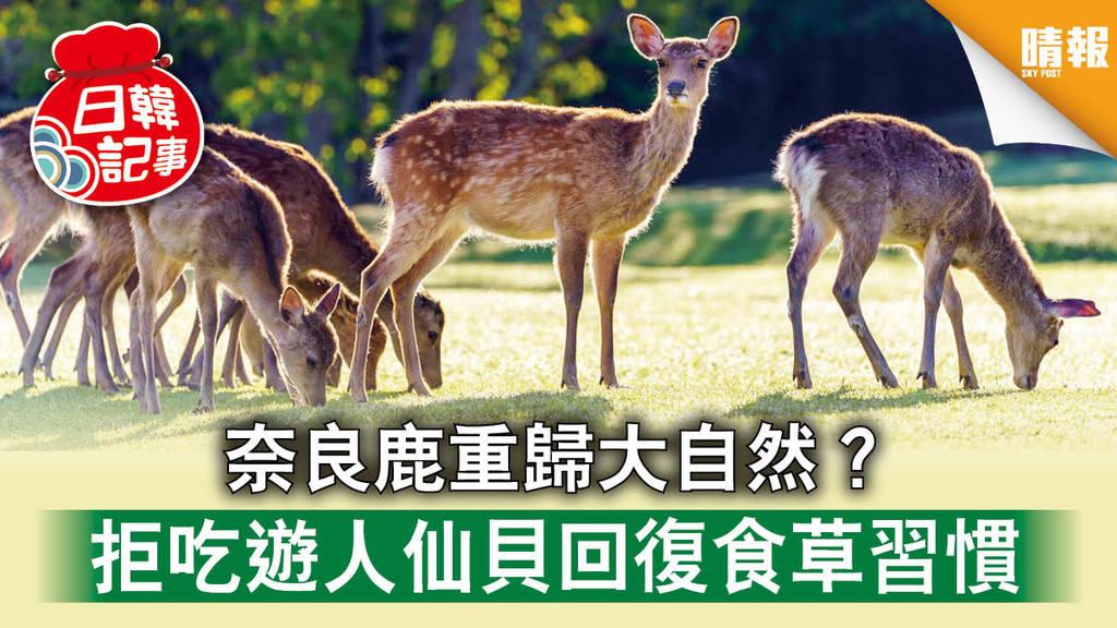 【日韓記事】奈良鹿重歸大自然 ? 拒吃遊人餵食仙貝 回復食草飲食習慣