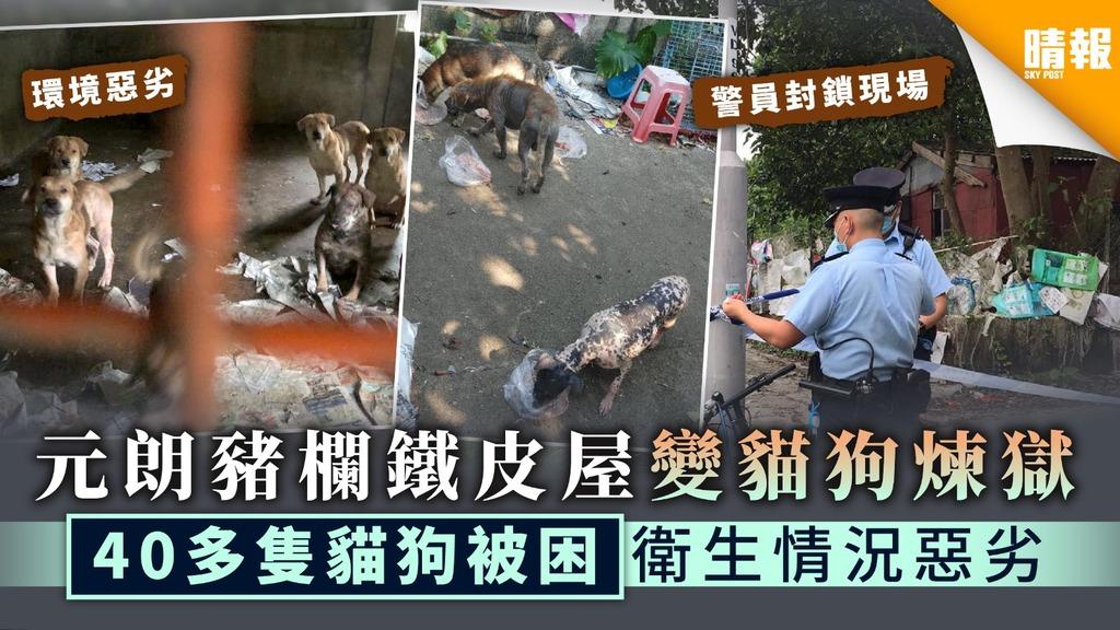 【保護動物】元朗豬欄鐵皮屋變貓狗煉獄 40多隻貓狗被困衛生情況惡劣