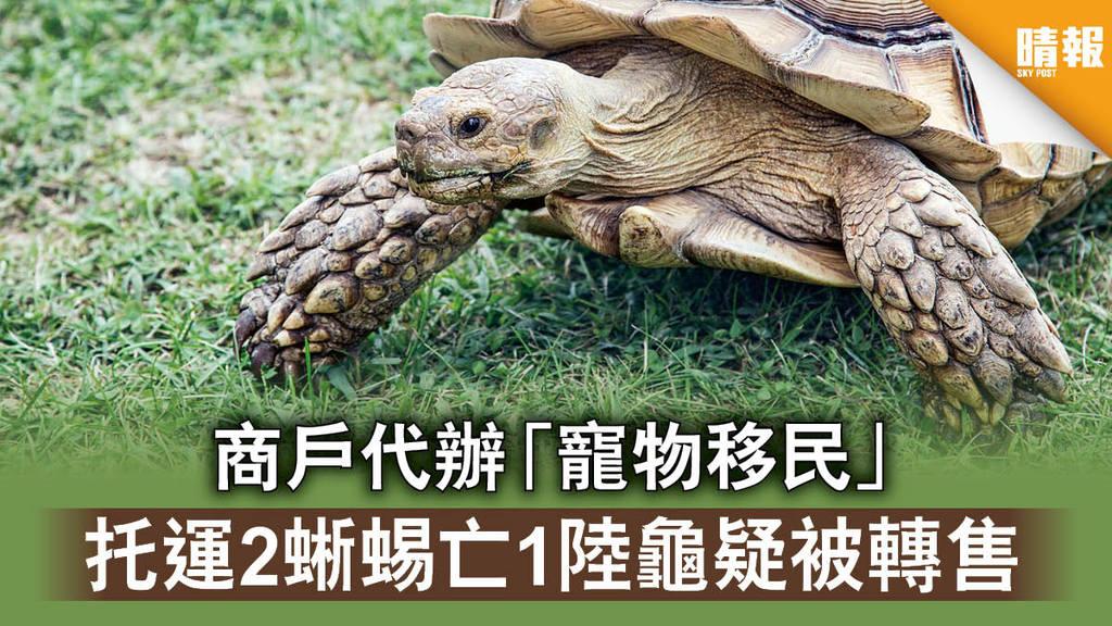 【消委會】商戶代辦「寵物移民」 托運2蜥蜴亡1陸龜疑被轉售