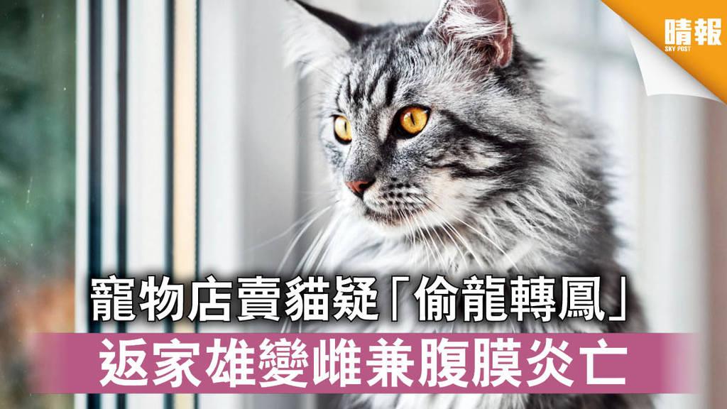 【消委會】寵物店賣貓疑「偷龍轉鳳」 返家雄變雌兼腹膜炎亡
