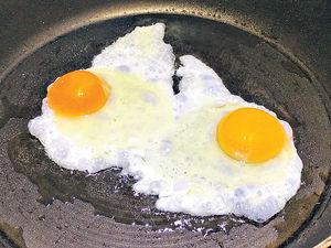 一隻雞蛋都充滿STEM