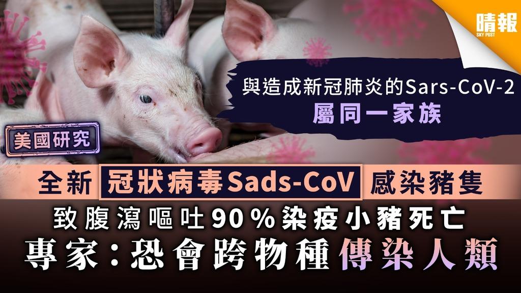 【美國研究】全新冠狀病毒Sads-CoV感染豬隻 致腹瀉嘔吐90%染疫小豬死亡 專家:恐會跨物種傳染人類