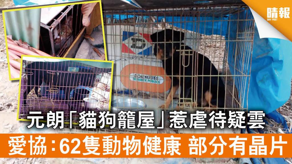 【保護動物】元朗「貓狗籠屋」惹虐待疑雲 愛協:62隻動物健康 部分有晶片