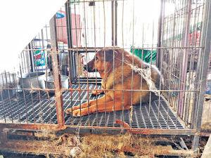 大棠「貓狗籠屋」困60動物被指虐畜 愛協︰有備糧水無違法