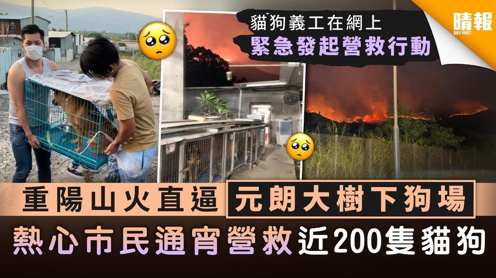 【重陽山火】重陽山火直逼元朗大樹下狗場 熱心市民通宵營救近200隻貓狗
