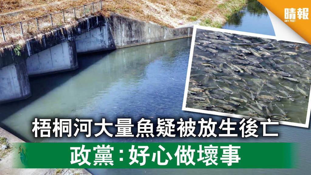 【生態災難】梧桐河大量魚疑被放生後亡 政黨:好心做壞事