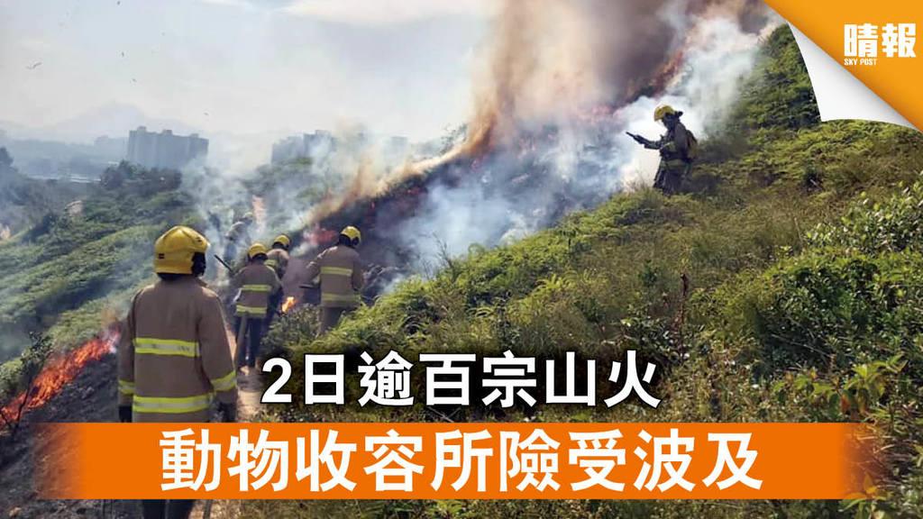 【重陽山火】2日逾百宗山火 動物收容所險受波及