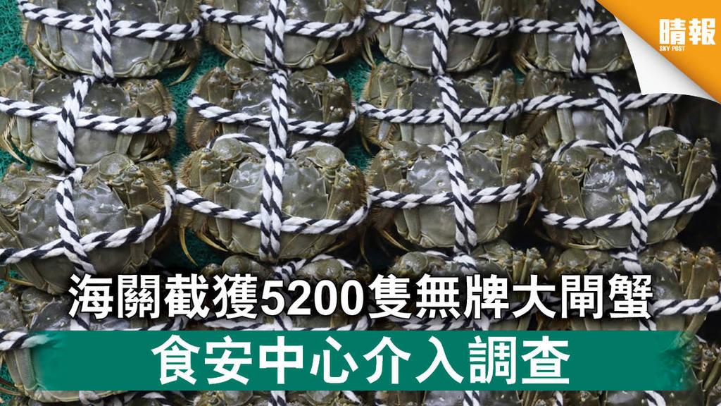 【大閘蟹】海關截獲5200隻無牌大閘蟹 食安中心介入調查