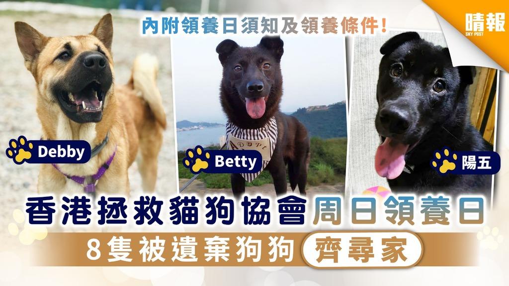 【周日好去處】香港拯救貓狗協會周日領養日 8隻被遺棄狗狗齊尋家