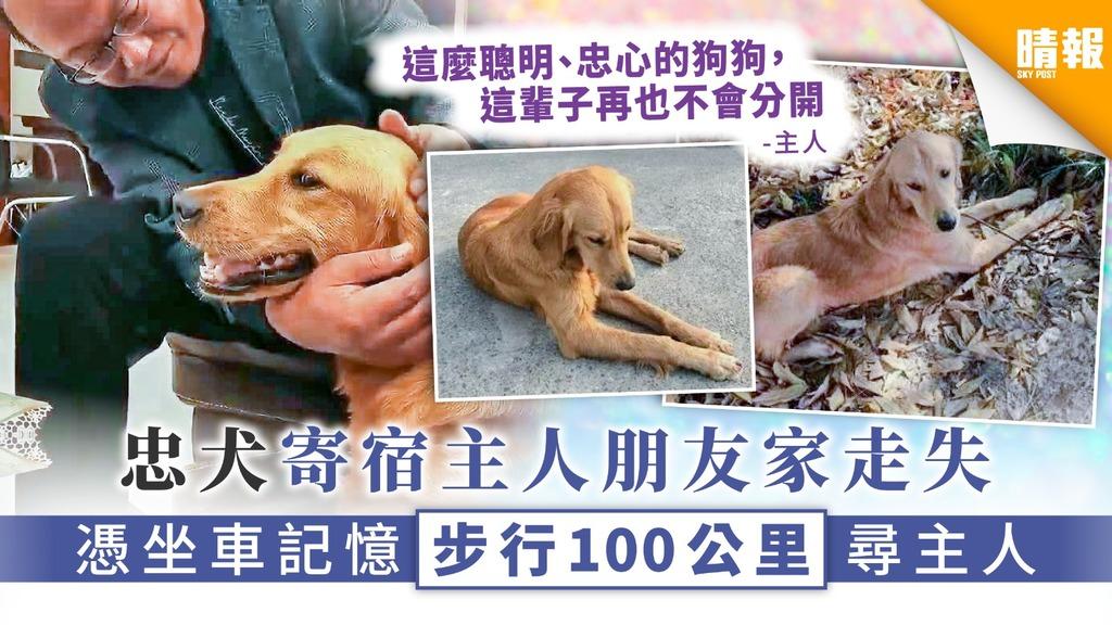 【人狗情深】忠犬寄宿主人朋友家走失 憑坐車記憶步行100公里尋主人