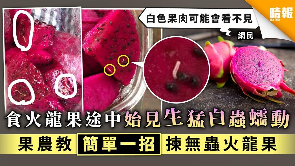 【食用安全】食火龍果途中始見生猛白蟲蠕動 果農教簡單一招揀無蟲火龍果