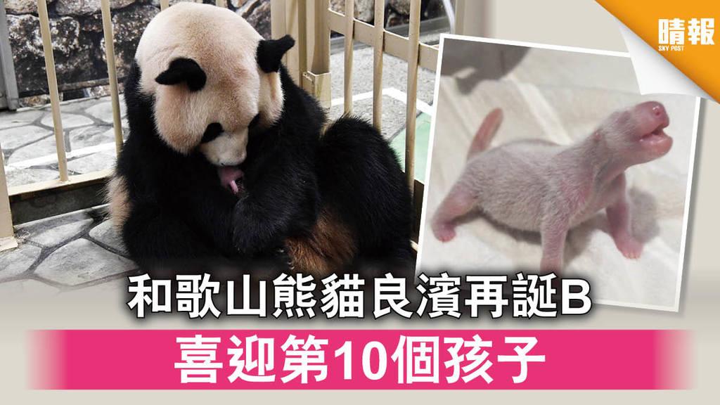 【日韓記事】和歌山熊貓良濱再誕B 喜迎第10個孩子